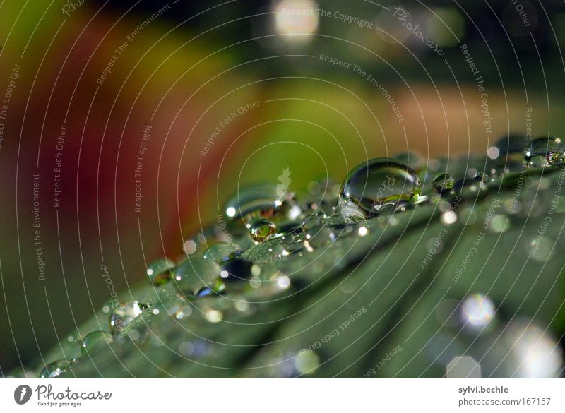 Nature Water Beautiful Green Plant Red Leaf Cold Rain Glittering Weather Wet Drops of water Fresh Multiple Drop