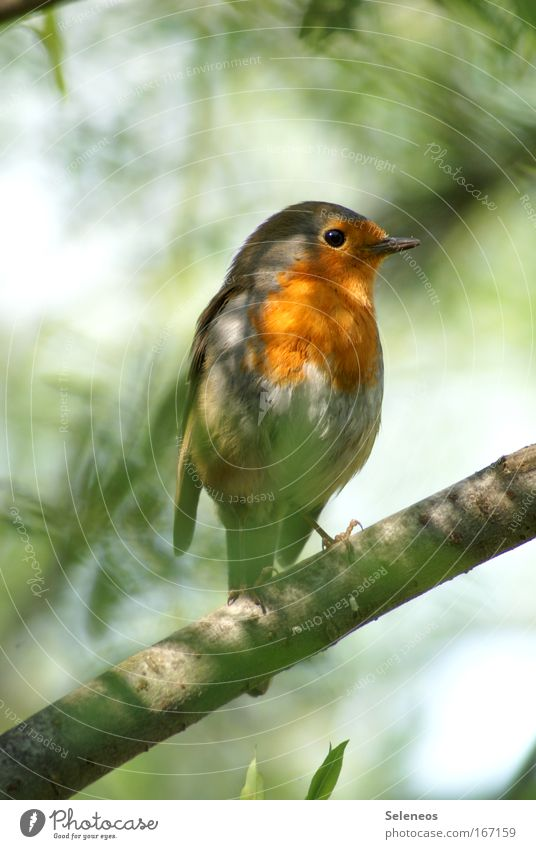 Loneliness Animal Bird Wing Wild animal Hide Robin redbreast