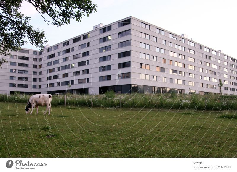 outskirts Colour photo Exterior shot Deserted Evening House (Residential Structure) Garden Nature Landscape Animal Sky Cloudless sky Tree Grass Meadow Field