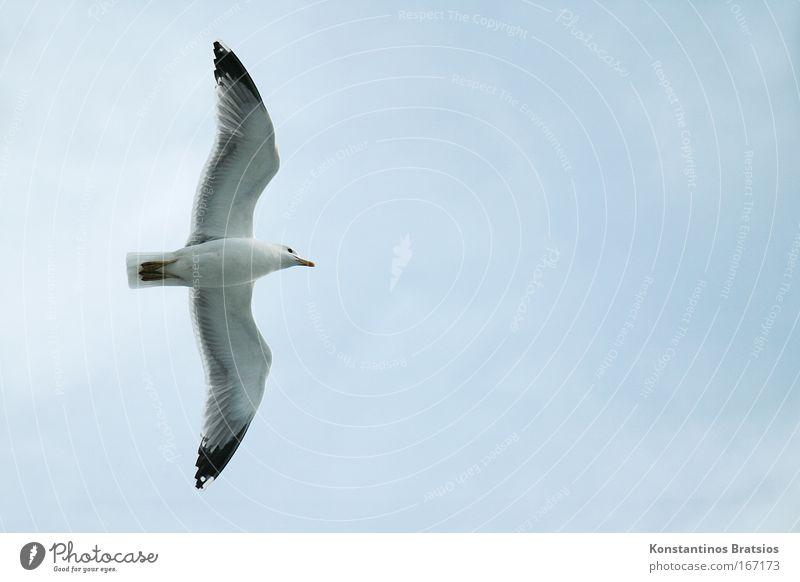 Nature Sky Blue Animal Freedom Gray Bird Flying Target Seagull