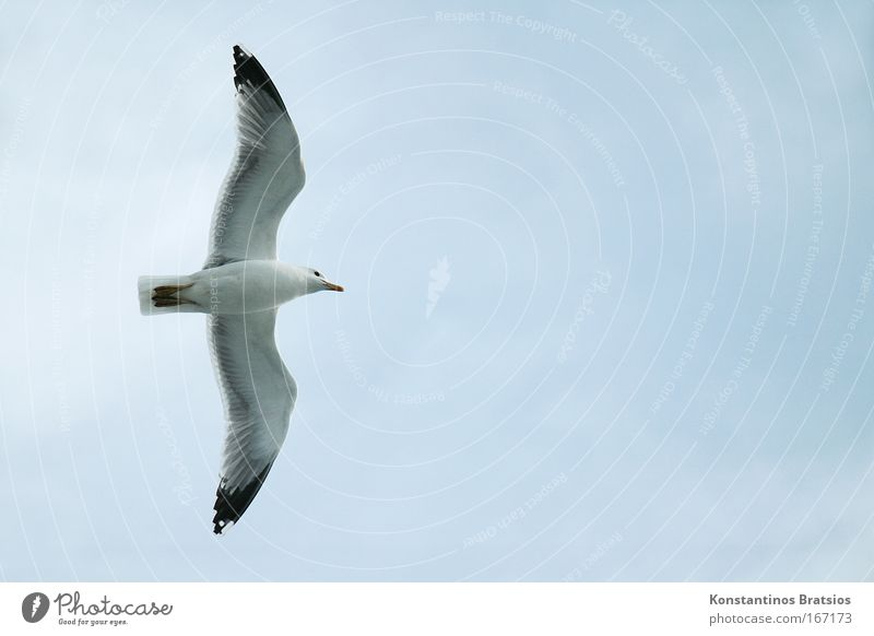 Nature Sky Blue Animal Freedom Gray Bird Flying Target Seagull
