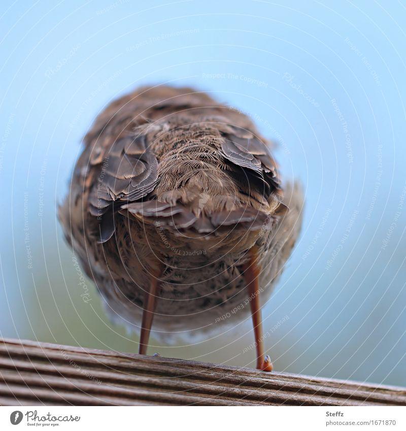 defiant and averse Hind quarters Bird Defiant Despite brave sb./sth. Disinterest dislike disinclined uninvolved uninterested Cool Cool (slang) Reluctance