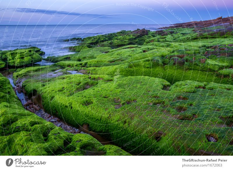 moss Environment Nature Landscape Blue Green Pink Algarve Coast Stone Rock Moss Ocean Water Sky Overgrown Plant Colour photo Exterior shot Detail Deserted