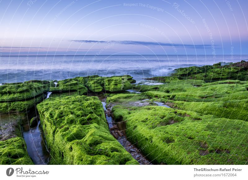 Moss II Environment Nature Landscape Sky Blue Green Pink Portugal Algarve Coast Ocean Water Carpet of moss Plant Stone Rock Moody Clouds Colour photo