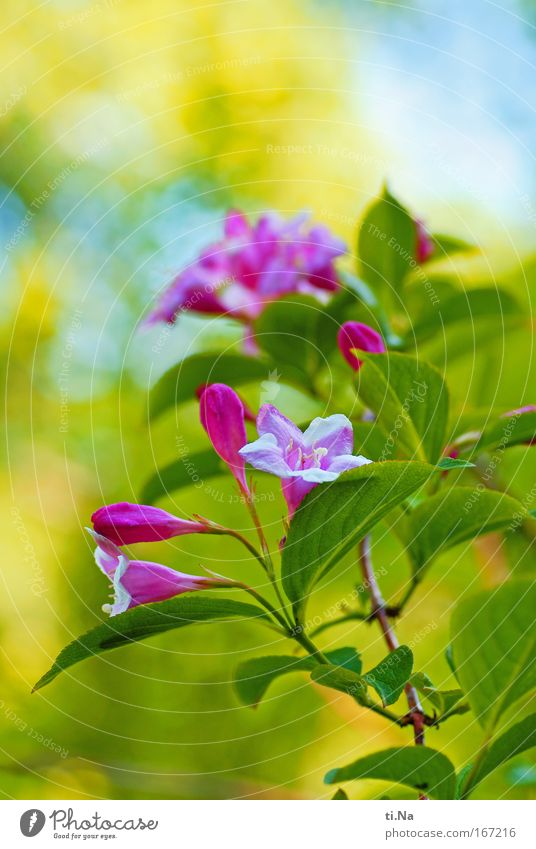 Nature Green Plant Animal Yellow Environment Landscape Blossom Park Pink Natural Fresh Bushes Beautiful weather Fragrance Pistil
