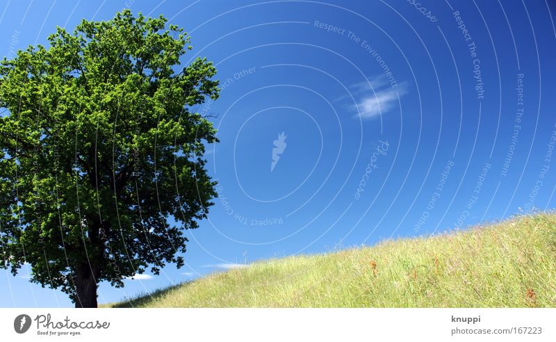 Sky Nature Blue Old Green Summer Plant Tree Meadow Warmth Grass Bright Air Natural Moody Field