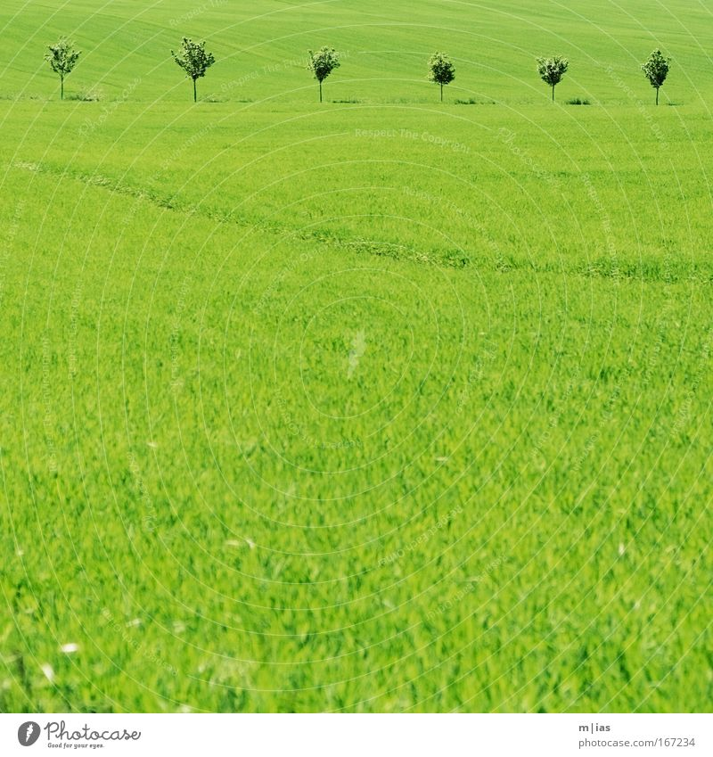Nature Tree Plant Summer Far-off places Meadow Grass Spring Dream Landscape Contentment Power Field Hiking Environment Free