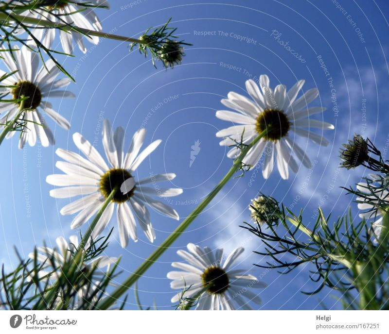 summer flower... Colour photo Exterior shot Deserted Copy Space top Day Sunlight Worm's-eye view Environment Nature Plant Sky Clouds Summer Beautiful weather
