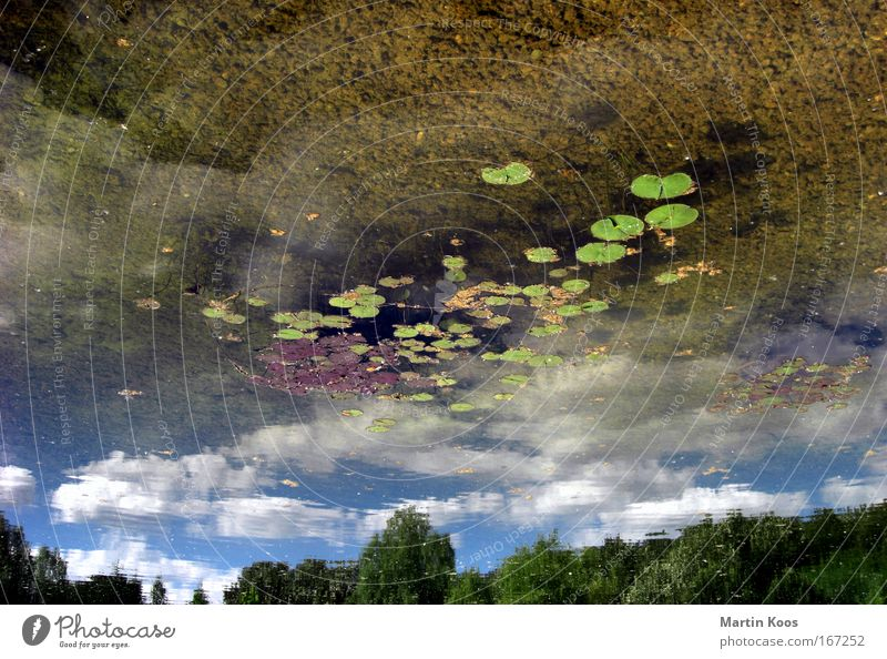 up is the new down Nature Landscape Water Sky Clouds Lake Surface of water Mirror Fresh Wet Above Under Mysterious Creativity Perspective