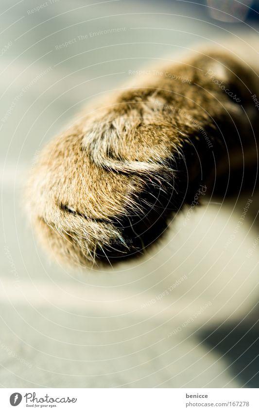 Beautiful Animal Cat Sweet Threat Pelt Cute Paw Domestic cat Cat's paw