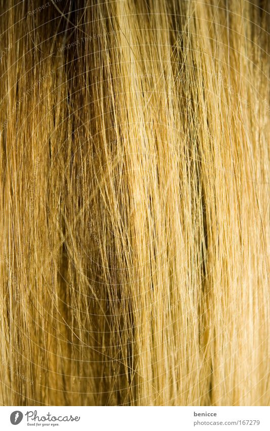 hairy Hair and hairstyles Smoothness Blonde Strand of hair Thread-like Close-up Background picture Detail Brown Hair colour Colour