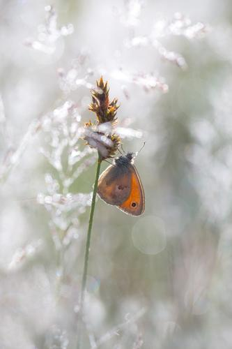 A butterfly sitting on a blade of grass Nature Animal Spring Summer Meadow Wild animal Butterfly Small meadowbird 1 Moody Happy Colour photo Exterior shot