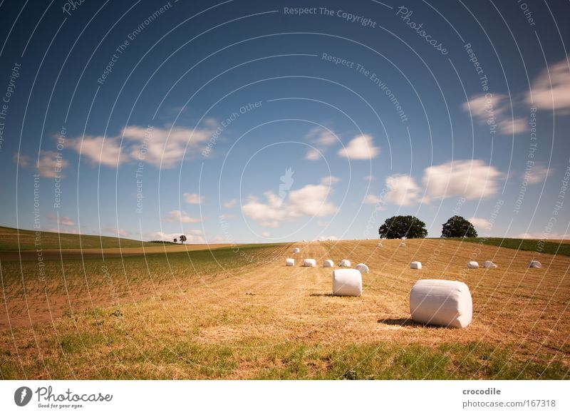 Marshmallow Field III Colour photo Exterior shot Day Shadow Contrast Sunlight Long exposure Motion blur Deep depth of field Central perspective Environment