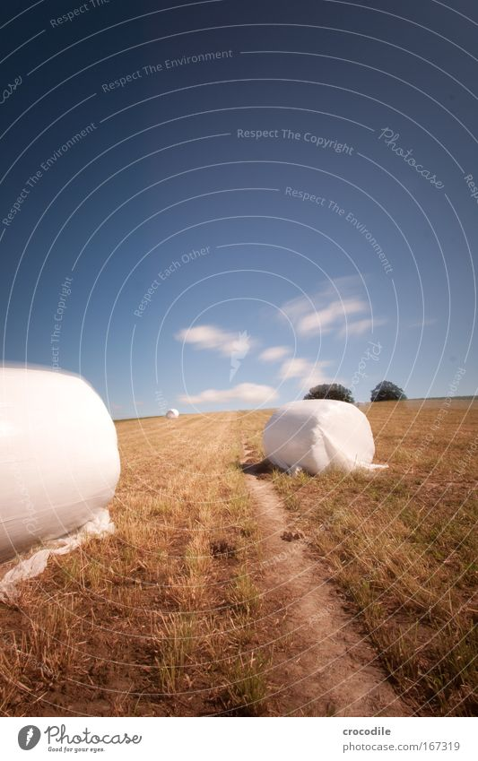 Marshmallow Field IV Colour photo Exterior shot Day Shadow Contrast Sunlight Long exposure Motion blur Deep depth of field Central perspective Environment