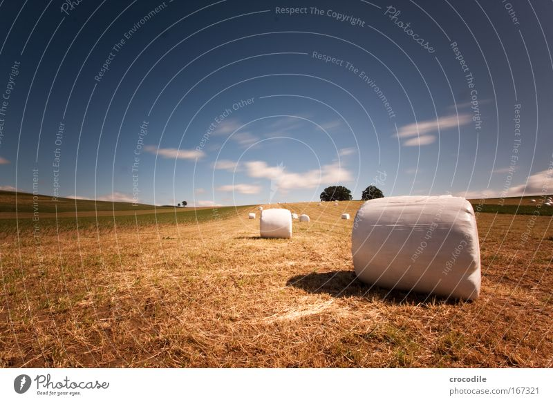 Marshmallow Field V Colour photo Exterior shot Day Shadow Contrast Sunlight Long exposure Motion blur Deep depth of field Central perspective Environment Nature