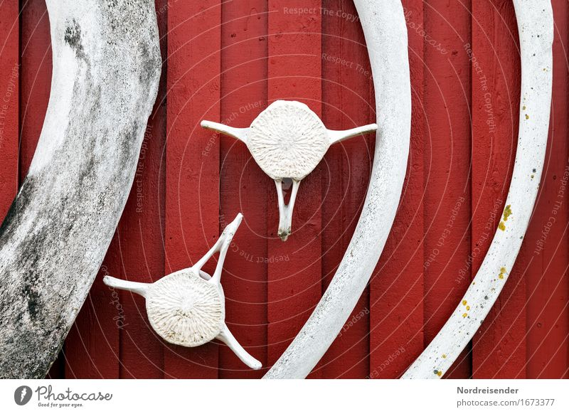 whalebone Animal Fishing village House (Residential Structure) Hut Wall (barrier) Wall (building) Facade Dead animal Sign Maritime Gray Red End Death