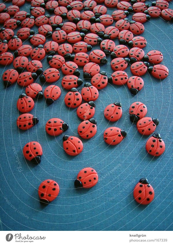 Beautiful Red Black Animal Gray Round Group of animals Insect Ladybird Beetle Environmental protection