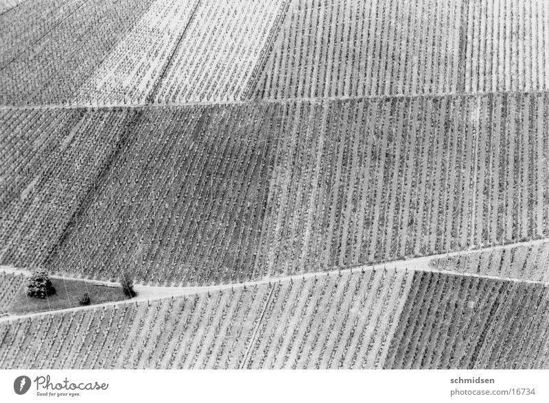 trollinger Manmade landscape Vineyard Stuttgart Mountain Structures and shapes Black & white photo abstraction