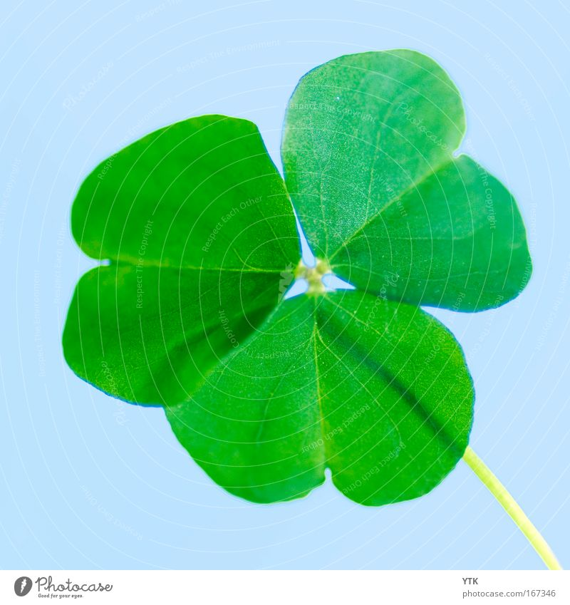 I lost my lucky clover! Colour photo Exterior shot Detail Macro (Extreme close-up) Pattern Deserted Isolated Image Neutral Background Day Shadow Contrast