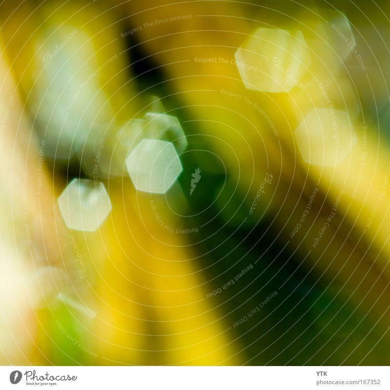 Nature Green Summer Yellow Colour Dark Warmth Moody Brown Glittering Design Environment Esthetic Simple Uniqueness Fantastic