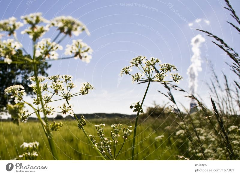 Nature Sky White Sun Green Blue Plant Summer Clouds Meadow Grass Field Electricity Environment Industry Energy industry