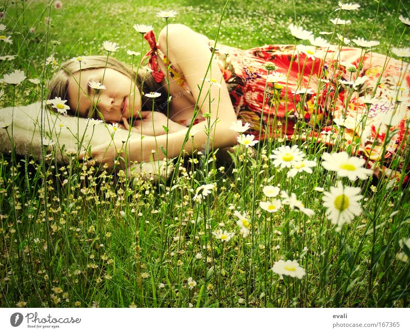 Human being Youth (Young adults) Green Summer Relaxation Meadow Woman Feminine Spring Head Flower Arm Sleep Marguerite Bolster Young woman