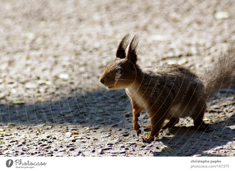 The squirrel effect Colour photo Exterior shot Day Shadow Worm's-eye view Landscape Wild animal Pelt Claw Paw Squirrel 1 Animal Feeding Wait Happiness Curiosity