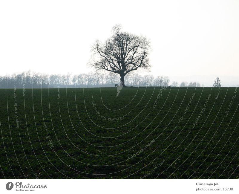 freestanding tree Tree Silhouette Far-off places Individual Landscape Graffiti