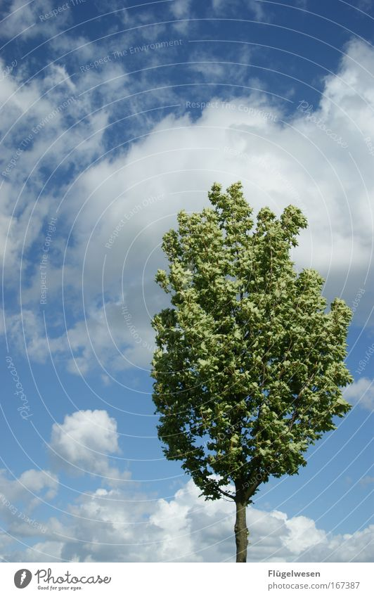 Sky Nature Tree Plant Joy Leaf Clouds Relaxation Environment Landscape Freedom Park Climate Fresh Friendliness Tree trunk