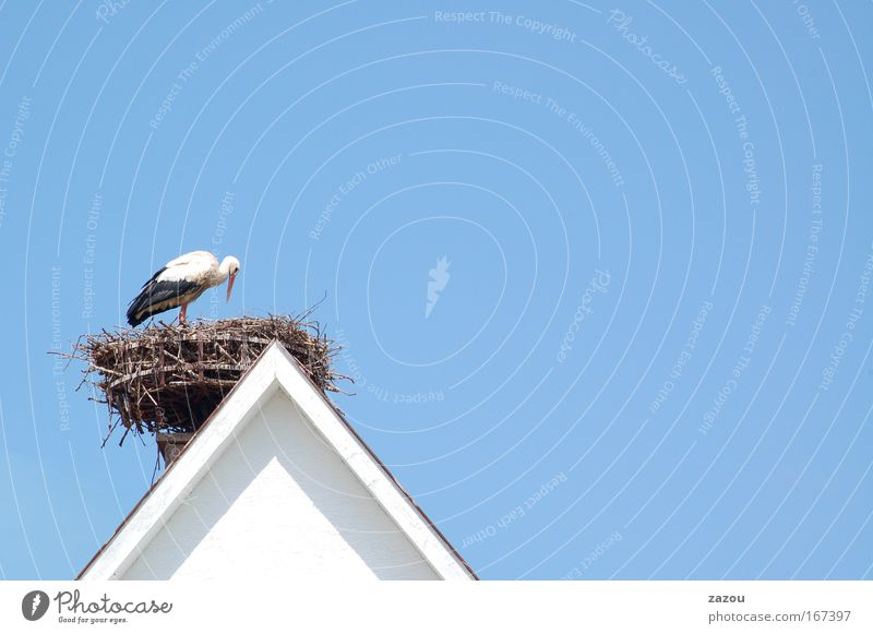 Sky Animal Bird Wild animal Roof Cloudless sky Feeding Nest Stork White Stork
