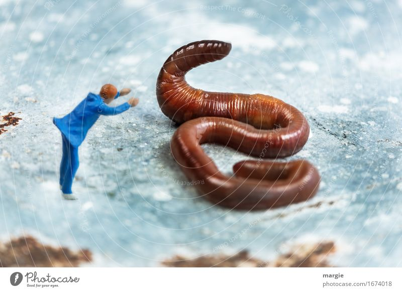 Human being Man Blue Animal Adults Brown Masculine Wild animal Worm