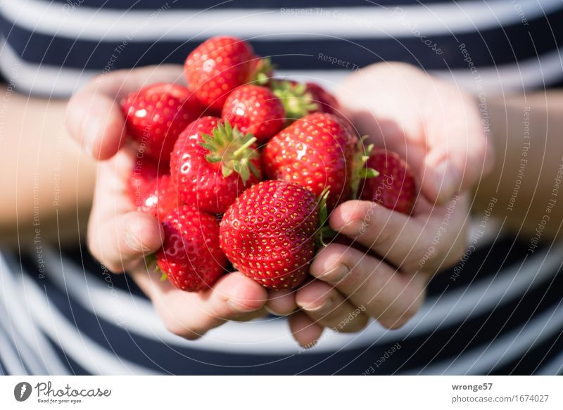 Freshly harvested Food Fruit Strawberry Vegetarian diet Human being Feminine Young woman Youth (Young adults) Woman Adults Body Arm Stomach 1 Carrying Healthy