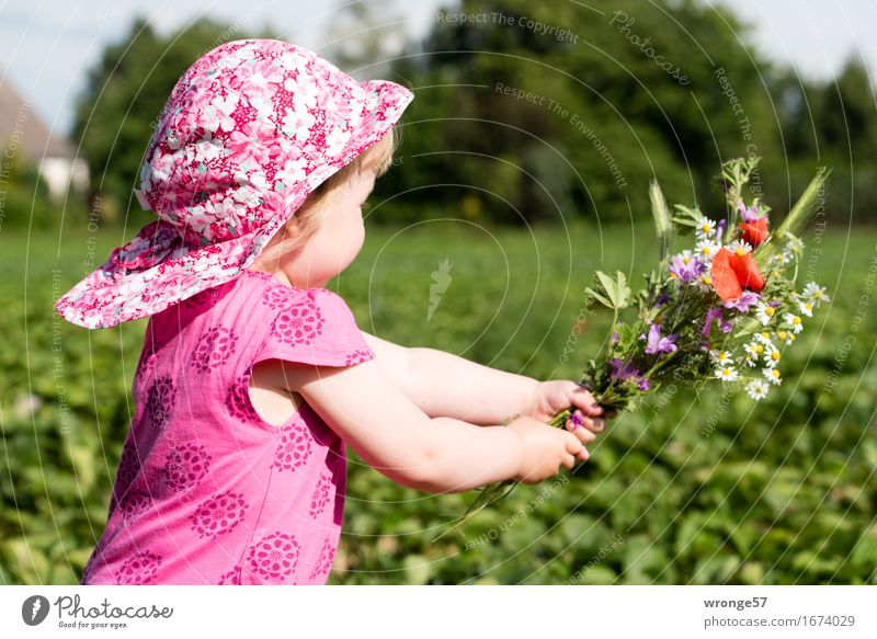 Human being Child Summer Green Red Girl Life Feminine Happy Pink Field Gift Dress Bouquet Cap Running