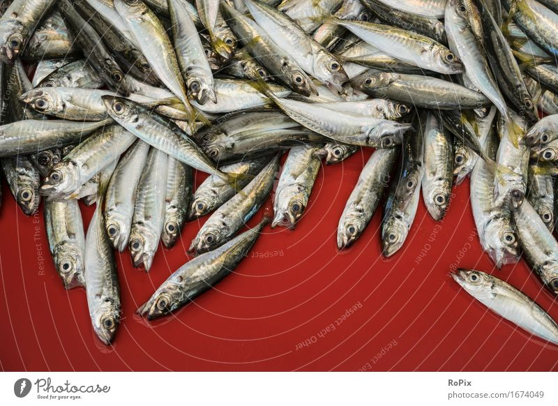 sardines Food Fish Seafood Nutrition Shopping Healthy Healthy Eating Fisherman fishermen Trade Environment Nature Animal Flock To enjoy Esthetic Fresh Delicious