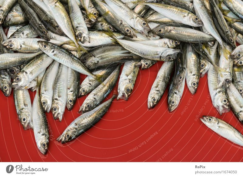 sardines Food Fish Seafood Nutrition Diet Cook Economy Trade Craft (trade) Environment Nature Water Ocean Scales Sardinia Flock Esthetic Authentic Simple
