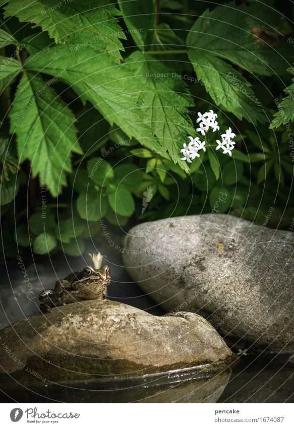 Unkissed Nature Elements Water Summer Plant Leaf Blossom Pond Animal Frog 1 Sign Famousness Disgust Success Historic Cold Astute Wet Smart Slimy Fairy tale