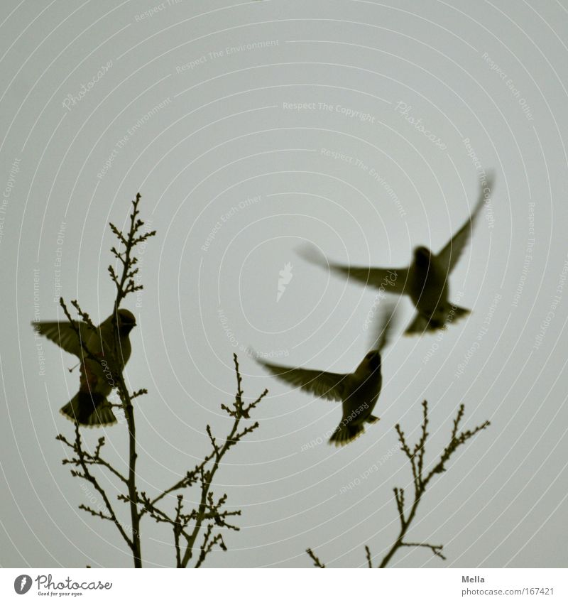 Nature Sky Tree Winter Animal Life Dark Autumn Movement Freedom Gray Air Together Bird Environment Flying
