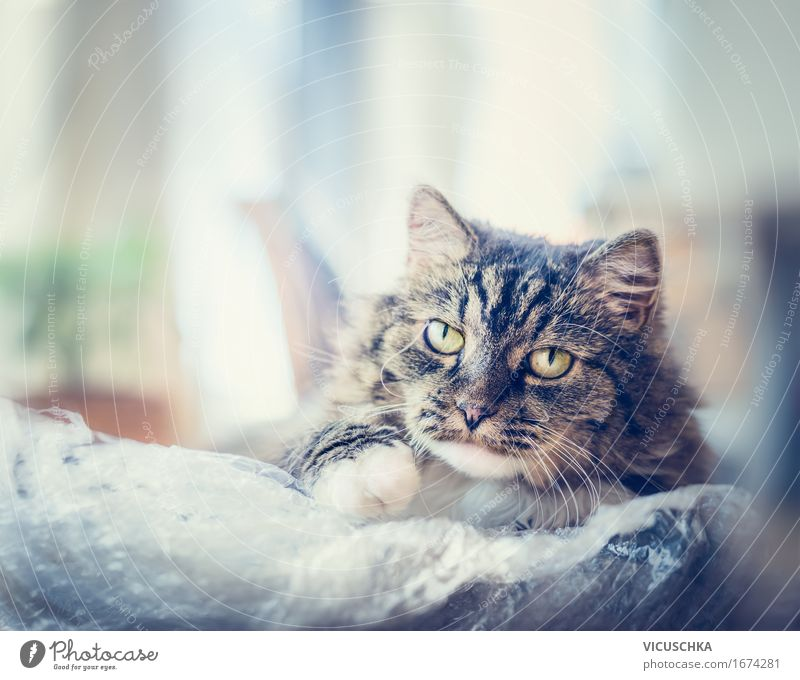 Charismatic cat with a plastic bag Lifestyle Vacation & Travel Living or residing Animal Pet Cat 1 Freedom Joy Nature Playing Close-up Eyes Friendship Emotions