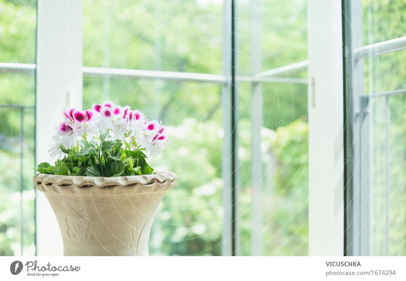 Terracotta flowerpot with geraniums at the window Style Design Summer Living or residing Flat (apartment) House (Residential Structure) Dream house Garden
