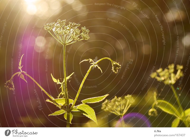 Eyes closed and knips - blinded by the sun Colour photo Exterior shot Evening Twilight Sunbeam Back-light Relaxation Environment Nature Landscape Plant Animal