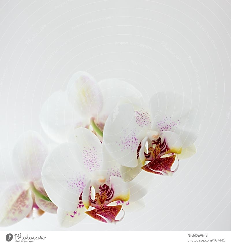 orchid Pattern Structures and shapes Copy Space top Light Lifestyle Luxury Elegant Style Exotic Beautiful Wellness Harmonious Well-being Contentment Senses