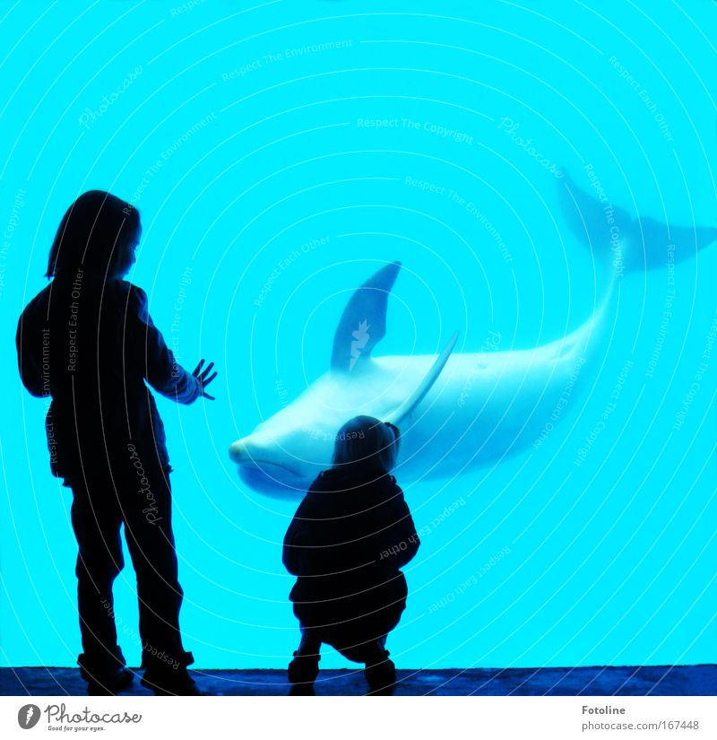 Human being Child Nature Water Hand Girl Ocean Animal Environment Movement Coast Infancy Together Waves Swimming & Bathing Fingers