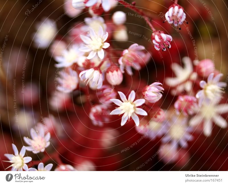 Nature Plant Colour White Flower Spring Blossom Pink Illuminate Growth Blossoming Star (Symbol) Delicate Fragrance Exotic Spring fever