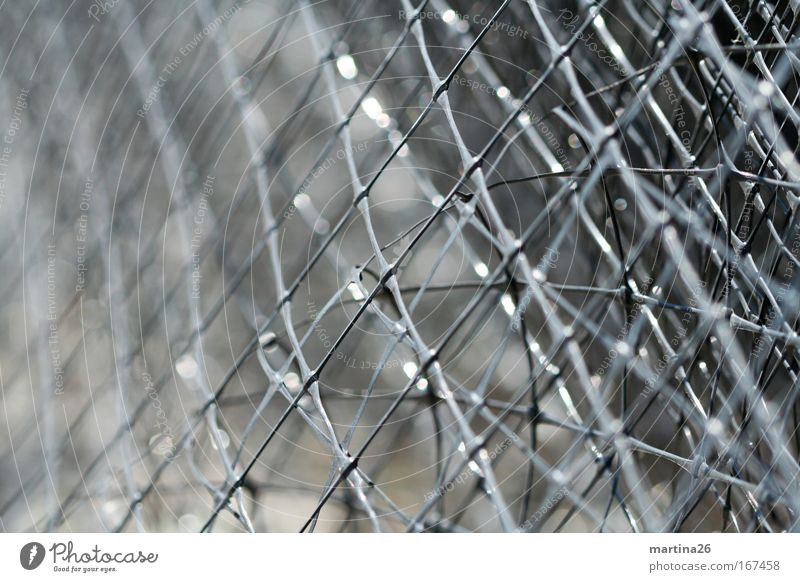 [PC-Usertreff Ffm] Grid from the roll Colour photo Subdued colour Exterior shot Macro (Extreme close-up) Abstract Pattern Structures and shapes