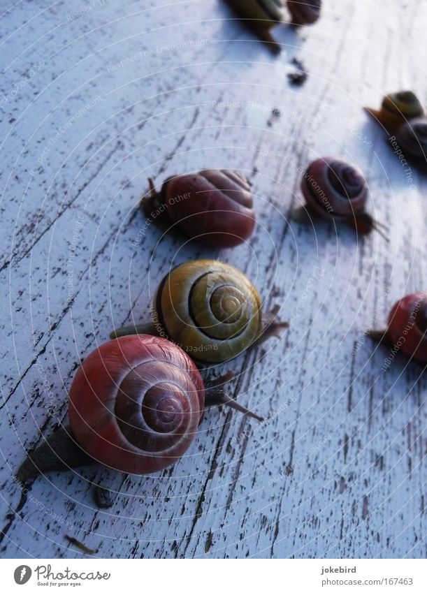 Nature White Joy Animal Movement Small Together Group of animals Team Near Snail Slimy Snail shell