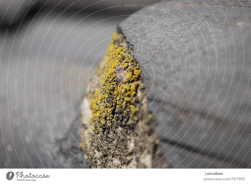 Nature Old Plant Black Loneliness House (Residential Structure) Yellow Gray Stone Spring Gloomy Roof Mushroom Forget Bad weather Lichen