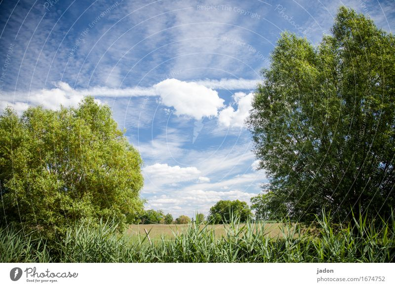 summer. Calm Fragrance Far-off places Summer Environment Nature Landscape Plant Sky Clouds Horizon Sun Sunlight Beautiful weather Tree Bushes Meadow Field