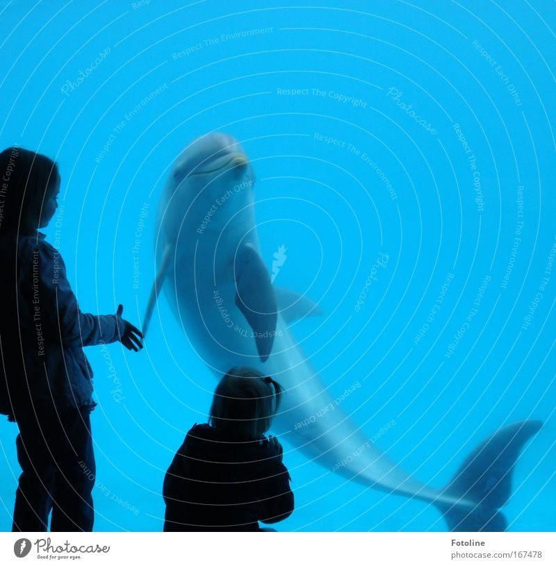 Human being Nature Blue Water Beautiful Girl Ocean Animal Black Environment Playing Gray Waves Swimming & Bathing Speed Esthetic