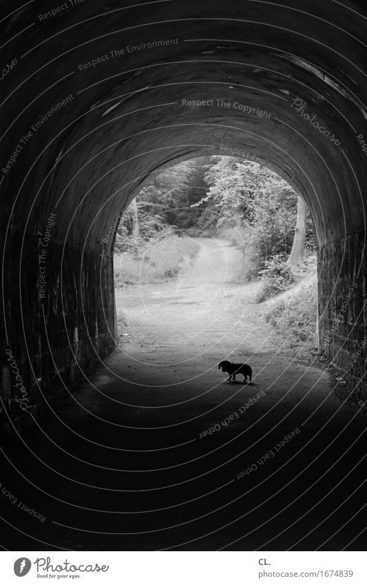 in the tunnel Forest Tunnel Lanes & trails Animal Pet Dog Dachshund 1 Going Dark Target To go for a walk Promenade Escape Black & white photo Exterior shot