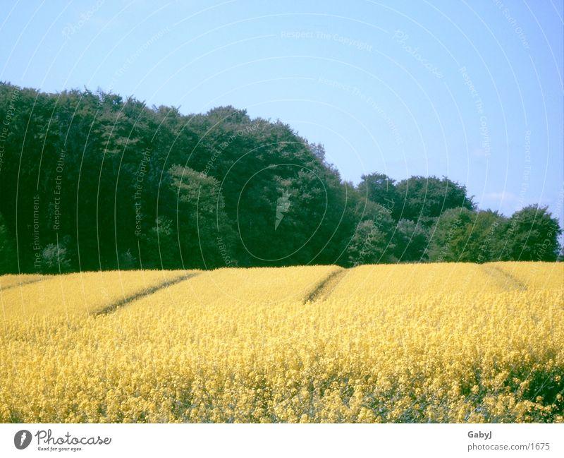 rapeseed body Agriculture Canola field Summer Yellow Splendid Field Oilseed rape oil Schleswig-Holstein Sky Furrow hüttener mountains Line Build